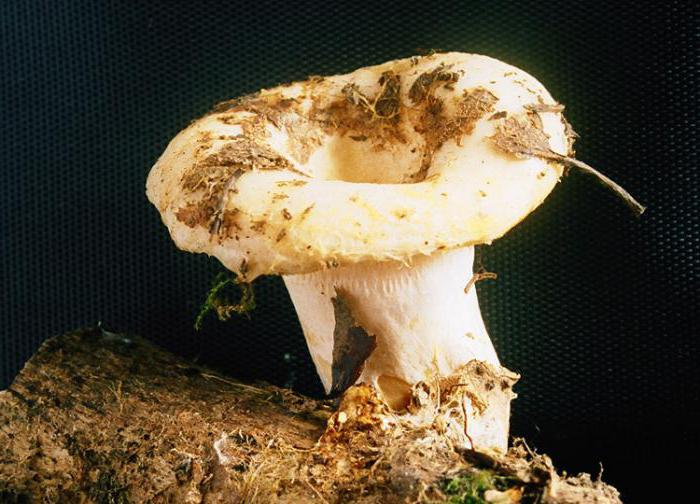 Pate de ciuperci Shiitake, g, Vitaquell : Farmacia Tei